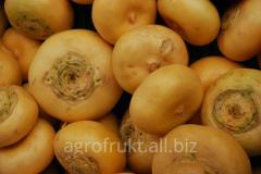 Turnip fresh