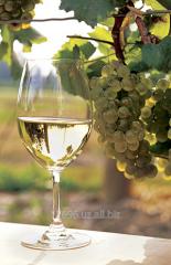 Виноматериал из белых сортов винограда