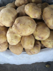 Potatoes Harvest of 2015