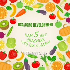 Nsa Agro Development