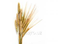 Удобрение для озимой пшеницы Атланте Плюс