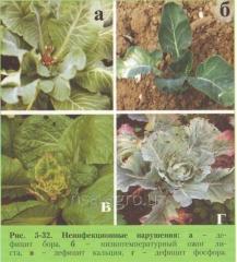 Почвенная подкормка капусты Aminocat 10