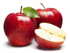 Базовая технология минерального питания плодоносящих насаждений яблони