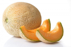 Root nutrition of melon cultures Kelik T