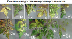 Базовая технология минерального питания томата