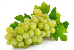Технология минерального питания винограда