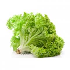Базовая технология минерального питания листья салата
