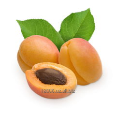 Apricot Season of collecting: June-Augus