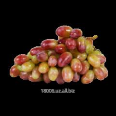 Rizamat grapes Season of collecting: