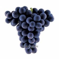 Кишмиш виноград Сезон сбора: август-декабрь