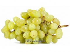 Husaini grapes Season of collecting: