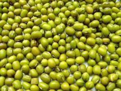 Mash, beans mung