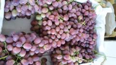 Grapes premium