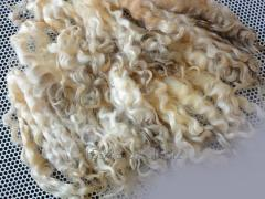 The WASHED astrakhan wool