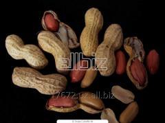 Peanut expor