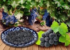 Jasmine sultana grape