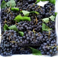 Grapes for expor