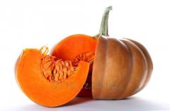Pumpkin fresh