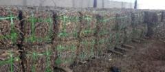 Liquorice, glycyrrhiza