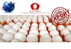 Eggs 1 categories expor