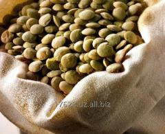 Green lentils french