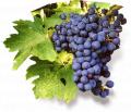 Саперави виноградный сок
