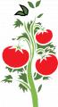 Листовая обработка помидор Raykat Start