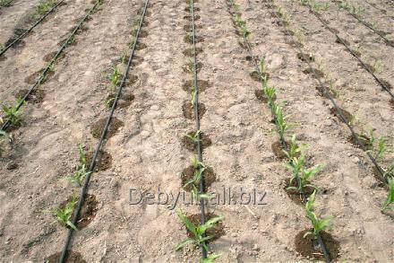 Order Assembling of systems of automatic irrigation