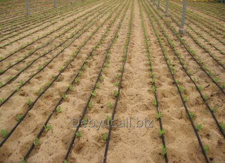 Order Design of irrigation systems