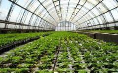 Строительство сельскохозяйственных предприятий