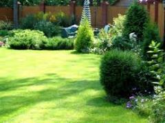 Посев и уход газонов, стрижка елок, ландшафтный
