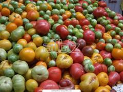 Экспорт фруктовых концентратов, различных видов