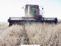 Переработка зерна
