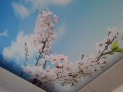 Фотопечать на натяжном потолке вишнёвая ветка