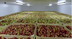 Аренда помещений для хранения фруктов
