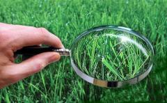 Анализ растений (тканевая диагностика)