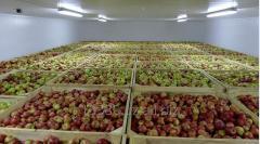 Хранение фруктов и овощей в холодильных камерах
