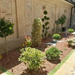 Озеленение двора