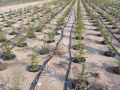 Montering av system för bevattning i växthus