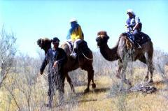Треккинг на верблюдах по пустыне