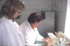 Услуги лабораторий