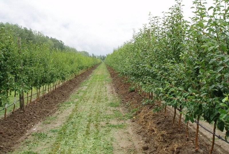 AgroDrip, TM