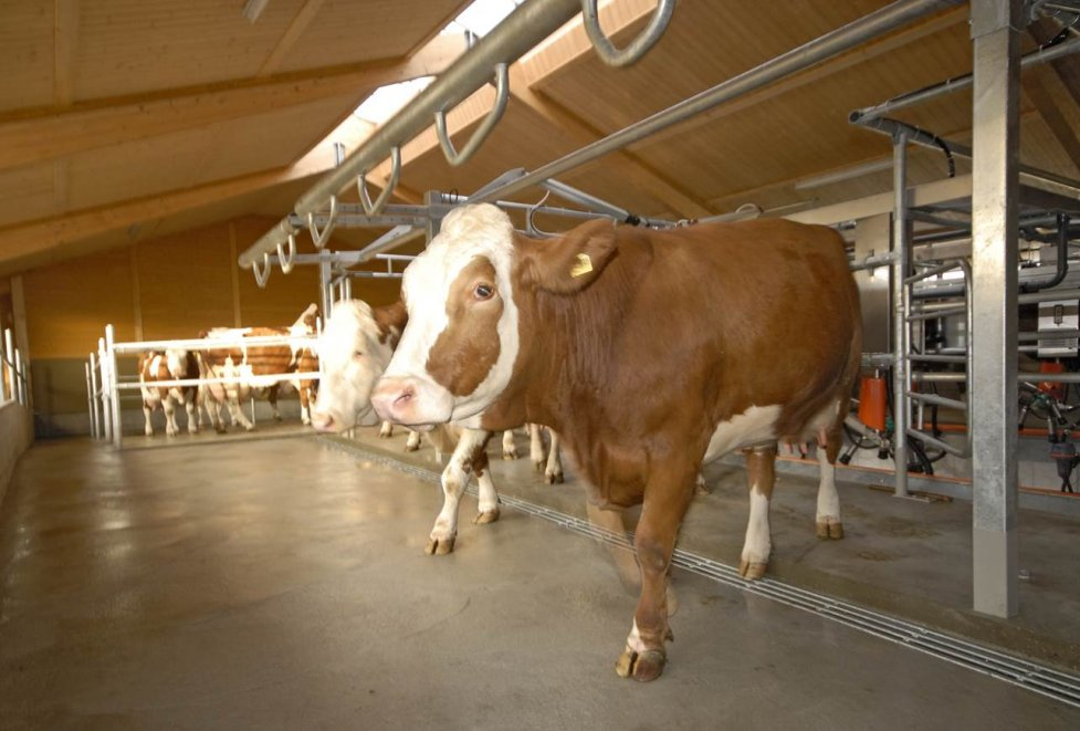 Agro Milking Systems